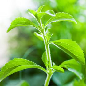 Natural sweeterner - stevia
